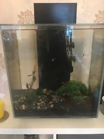 Fluval edge 46l fish tank with filter light and heater