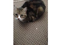 2 female cats free to loving home
