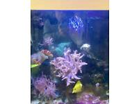 Live rock fish and corals