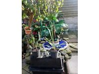 Small yucca plants forsale
