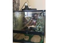 Male leopard gecko and full setup.....offers