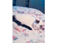 8 month old kitten needs to be rehomed (price includes everything in the description box)