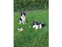 Dog walker/ sitter avaliable