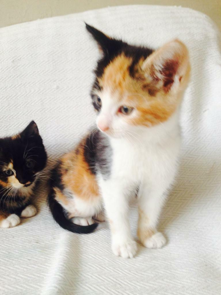 Free Cats And Kittens For Sale