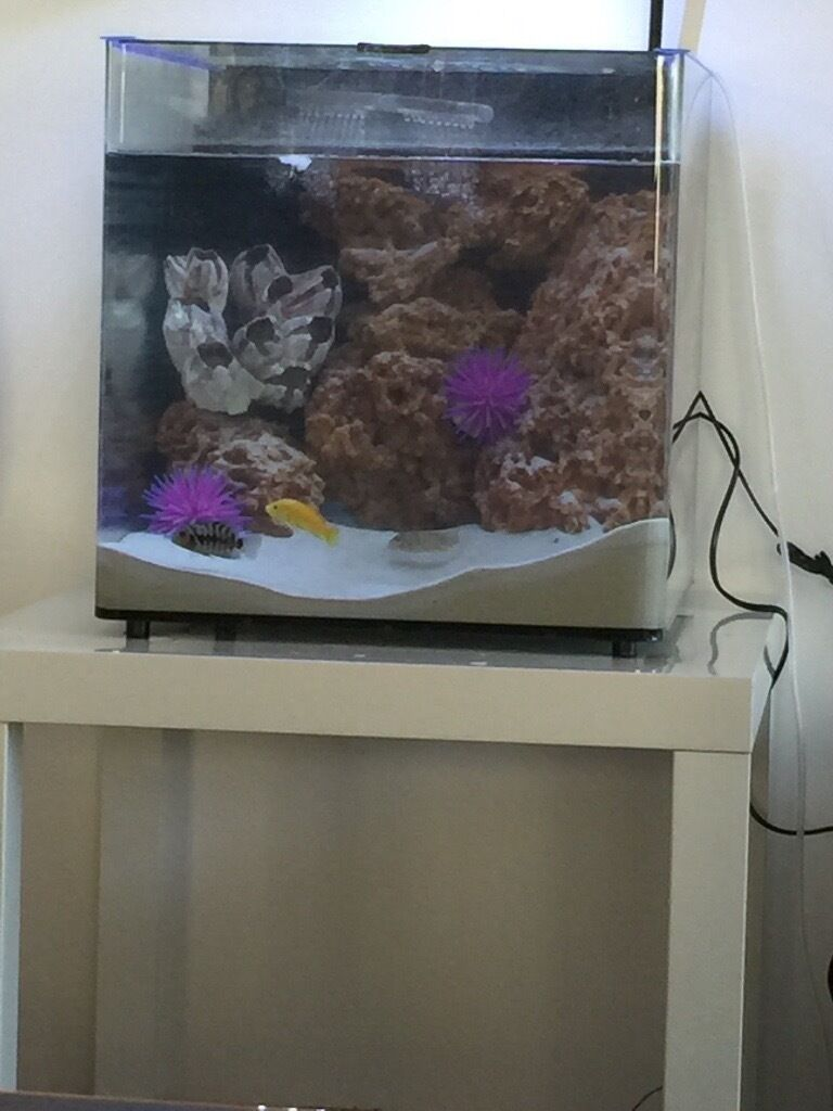 Aquarium fish tank for sale in london - Fish Tank For Sale 55l