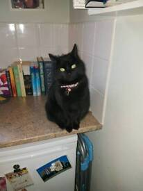 Are you an experienced cat owner for my beautiful cat Ellie