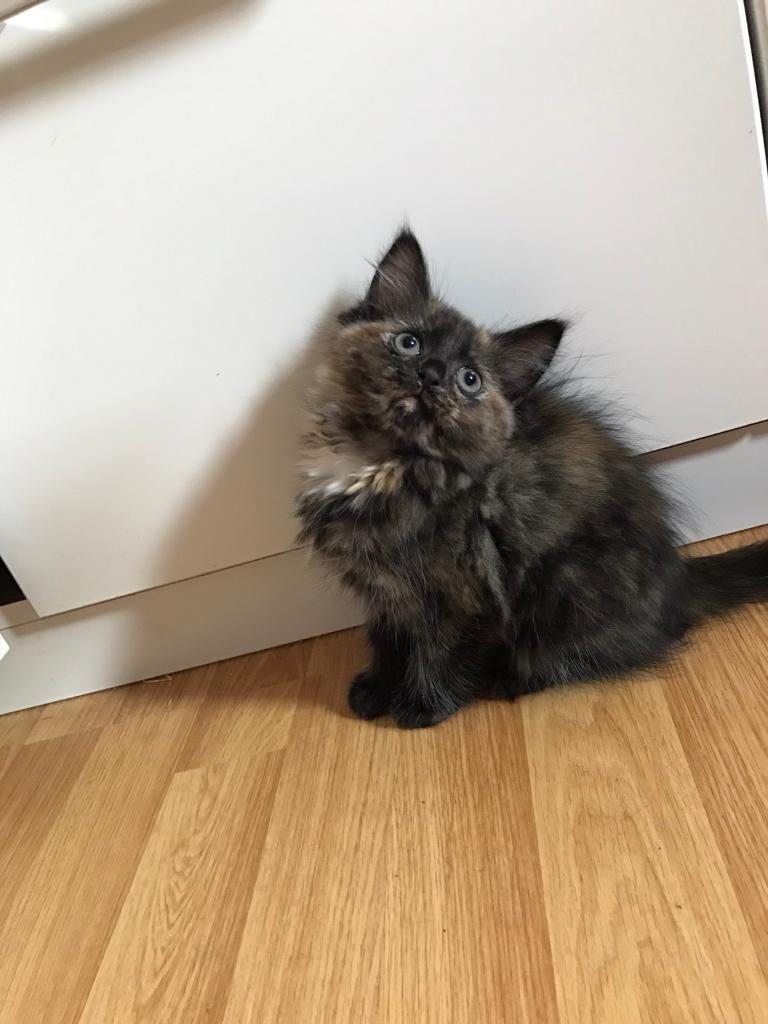 Cute kittens for a loving home