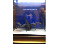 72 litre aquarium