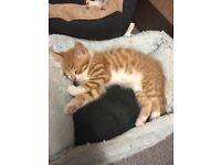 10 Lovely Kittens for Sale