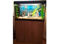 Fish Tank and Lovely Fishes For Sale