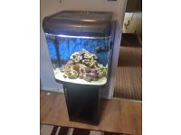 Interpet 94 litre, fully setup marine saltwater fish tank + corals, fish , equitment