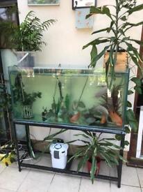 4ft fish tank full