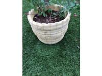 Concrete garden plant pot