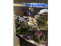 Marine Fish tank 120litre