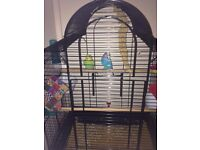 2 x Budgies, plus cage, food and accessories - £50 ONO