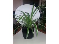 Indoor plant green house plant