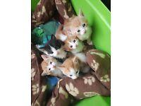 5 kittens ready in 3 weeks