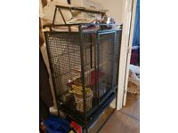 Two bird's and cage for sale