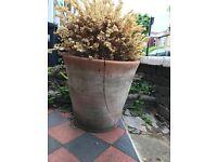 Terracota Pot