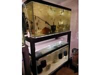 3ft fish tank rack system (2 tanks)