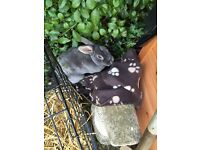 2 rabbits for free