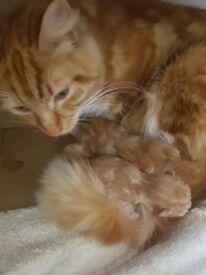 Kitten and mummy cat x