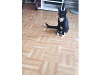 Free 2 kittens needing new homes