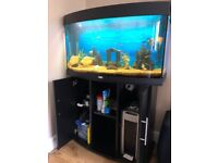 Juwel Vision 180 Aquarium, Bow Front with Stand, external filter, UV Lamp and Fish
