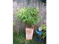 Garden pot with bamboo no 2