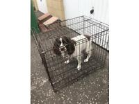 FREE Medium dog cage kennel