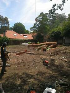 Land Clearing Services Sydney Oatlands Parramatta Area Preview