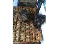 Beautiful kittens mixed litter eating wet n dry food fleas treated n wormed litter trained ready now