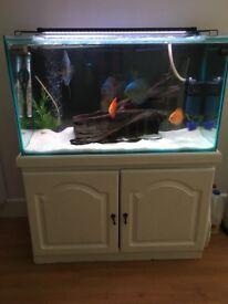 Fish tank 180L full set up