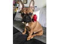 Dog sitter/pet sitter/dog walker available
