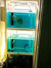 2 new breeding aquarium and sump for sale