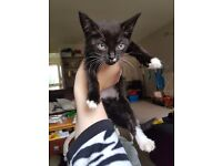 2 kitten need homing together both girls. Short haired very friendly