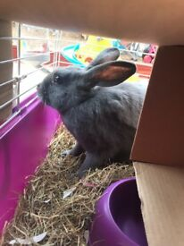 Female Rabbit with Hutch