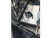 Found black and white cat W11 Holland Park