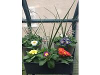 Mother's Day planters (plants)
