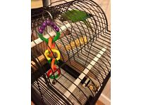 Looking to sell a Very cute young parrot with cage and accessories.