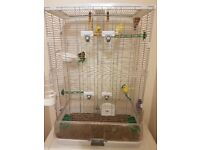 4 canaries, large cage, birds