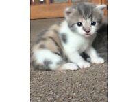 Kittens - reserved!!