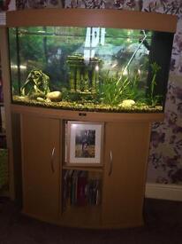 Juwel vision 180 full fish tank set up