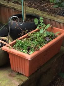 Large garden planter free to good home!