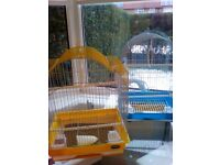 Baby budgies with cage.