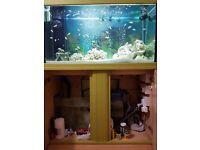 Fish Tank Full Setup for Sale (Aquarium Sale) 450 ONO