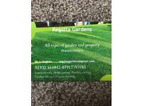 Regatta garden maintenance /garden services / local gardener /lawn mowing /gardening/hedge trimming