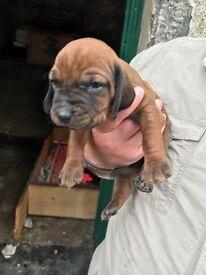 Stunning Bavarian Pups