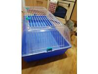 5 month old male rabbit with 2 hutches and all essentials