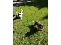 Dog walking, doggy daycare, pet sitting, Barnham based, large enclosed garden, daily beach run